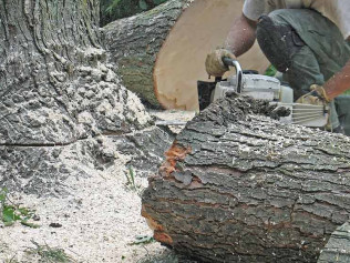 Tree Removal and Stump Grinding